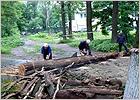 В Майском парке в Бежице начались санитарные рубки аварийных деревьев