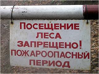 В Брянской области запрещено посещение лесов