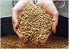 Стародубский район лидирует в завершающейся уборке зерновых