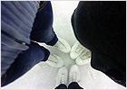 brn_ice