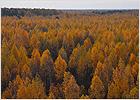brn_forest
