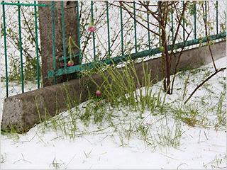brn_pogar_snow
