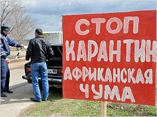 В соседней Смоленской области зафиксирована африканская чума свиней