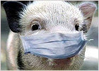 pig_in_mask_small