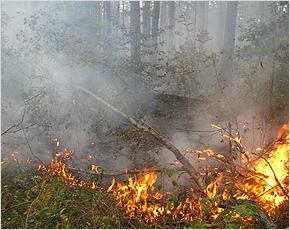 brn_fire_forest2013_snezh