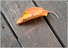 leaf_small