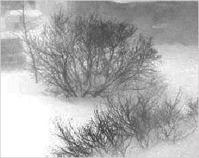 Прогноз погоды на 11 января: местами кратковременная метель, днём до +2°С