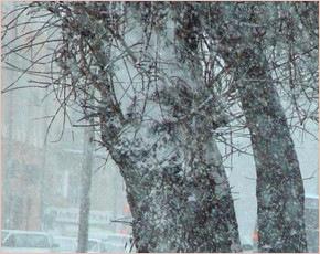 Прогноз погоды на 11 декабря: переменная облачность, ночью до 18ºмороза