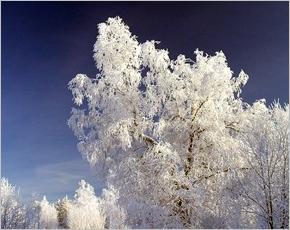 Прогноз погоды на 30 января: на дорогах скользко, днем до 19˚ мороза
