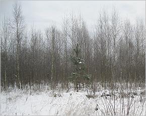 В Выгоничском районе не используются в сельхозобороте более 250 гектаров земли