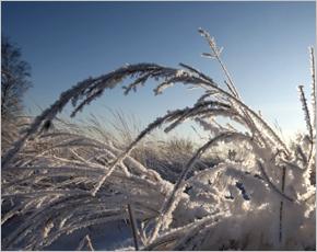 Прогноз погоды на 31 января: ветер юго-восточный, днем до 18˚ мороза