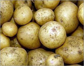 Лидером подорожания в регионе за неделю стал картофель — Брянскстат