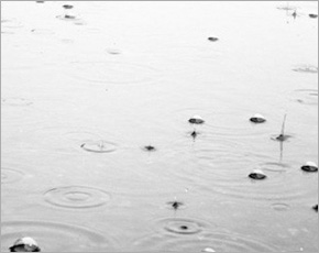 Прогноз погоды на 27 апреля: дожди при юго-западном ветре, днём до +17