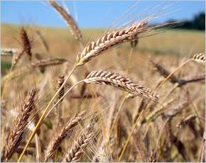 Брянские аграрии просят погектарные субсидии на очищение земель от радиоактивных отходов