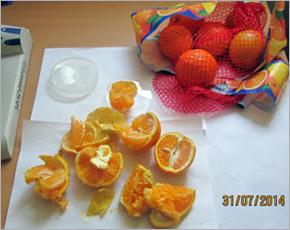 Из Брянской области «завернули» апельсины, заражённые плодовой мухой