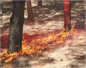 Брянская область включена в число регионов с особым противопожарным режимом