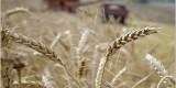 До конца месяца уборка зерновых будет завершена – Борис Грибанов