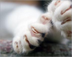 Клинчанину выписали штраф за выброшенную с балкона кошку