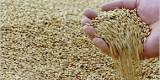 Брянские аграрии собрали первый миллион тонн зерна урожая-2017