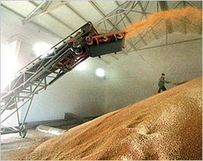 Закупочные цены на зерно в Брянской области начали повышаться