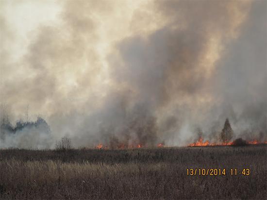 fire_field