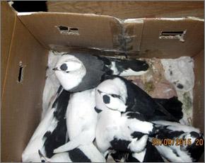 В Суземке с пассажирского поезда сняты голуби без документов