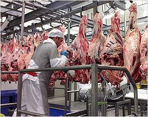 «Мираторг» вложил 32 млн. в брянский «мясной проект» для повышения производительности труда на 15%