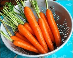 Лидером подорожания на прошлой неделе стала морковь — Брянскстат