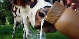 Стародубский район доит из каждой коровы по 5,5 тыс. кг молока