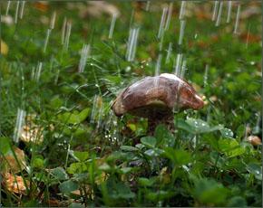 Прогноз погоды на 13 сентября: дожди, местами с грозами, днём до 24 тепла