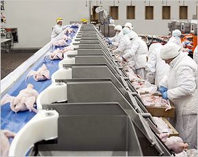 «Мираторг» впервые поставил курятину в Европейский Союз