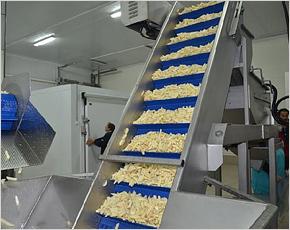 Брянской области рекомендовано построить пару заводов по переработке картофеля