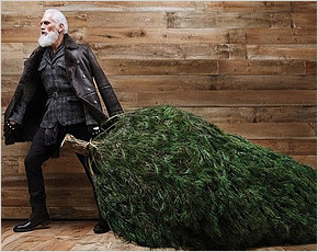За вырубку 18 деревьев новозыбковский депутат может сесть на четыре года