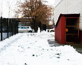 Прогноз погоды на 11 февраля: снег при северном ветре, местами туман, днём до нуля