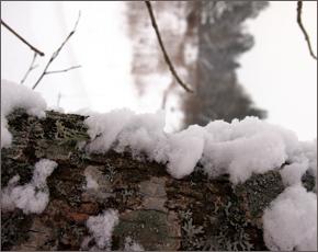 Прогноз погоды на 10 января: снежно, местами туман, днём до минус 13