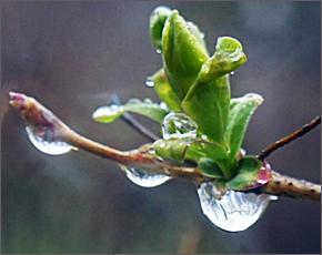 Прогноз погоды на 23 апреля: дожди и мокрый снег, ветер западный, до +13