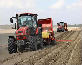 Погарская картофельная фабрика создаёт собственную сырьевую базу
