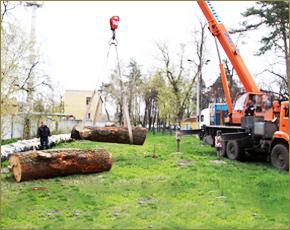 Для воссоздания знаменитых фигур парка Толстого подысканы первые дубы (ФОТО)