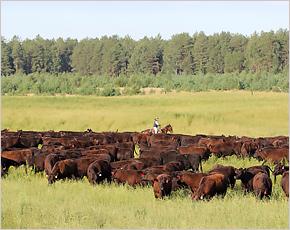 «Мираторг» удвоит инвестиции в проект мясного животноводства в Смоленской области