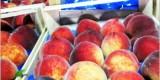 Во ввозимых в Брянскую область персиках обнаружена плодожорка
