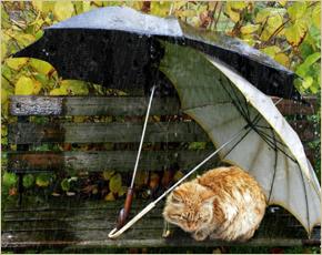 Синоптики предупредили жителей региона о сильных дождях с грозами в субботу