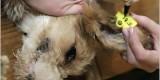 На отлов и стерилизацию бродячих собак брянские власти потратят почти 2 млн. рублей
