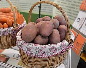 Брянская доля в общероссийском экспорте картофеля составила 1%