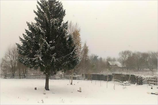 snow_krg