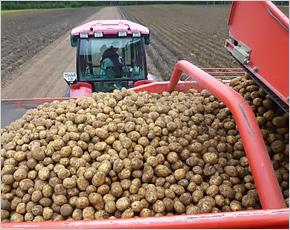 Брянскстат отчитался о зерне и картошке с точностью до мешка