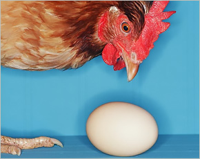 Брянское сельское хозяйство в январе: больше на одно яйцо