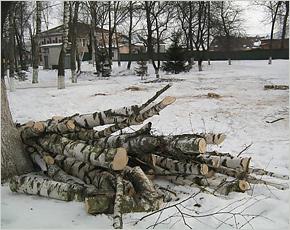 В центре Мглина вырублено полсотни деревьев на основании решения 0,62% жителей города