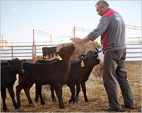 «Мираторг» создаст до конца года в рамках «мясного проекта» более 1,3 тыс. рабочих мест