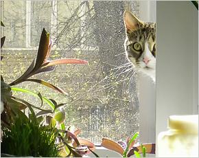 1 марта – День кошек в России