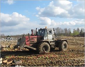 Под Новозыбковом зарыто в землю 17 тонн санкционных яблок